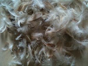 毛片系列(灰鸭毛片2-4cm)